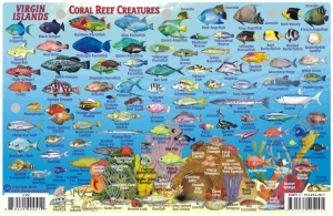 CaribbeanFishCardVirginIslandsSide2